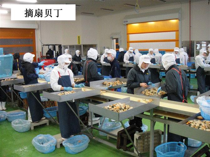 赴日本北海道水产食品加工招募进行中